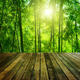 Bamboo forest. Wooden platform and Asian Bamboo forest with morning sunlight Stock Photography