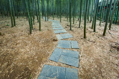 Bamboo forest in Yixing Royalty Free Stock Photography
