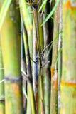 Bamboo Forest Zen background stock photo