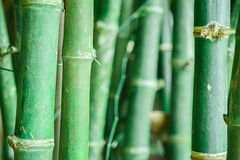 Bamboo forest. Zen tropical ambiance Stock Photo