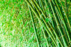 Bamboo forest. Zen tropical ambiance Stock Photos