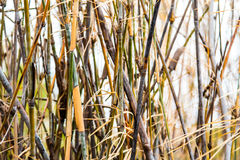Bamboo in forests background Stock Photos