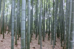 Bamboo forests at Kyoto Japan Stock Images