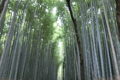 Bamboo forests at Kyoto Japan royalty free stock images