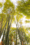 Bamboo forests Stock Photos