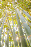 Bamboo forests Stock Photo