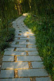 Bamboo forests in the path. Filled with quiet Royalty Free Stock Photos