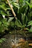 Bamboo fountain. Traditional bamboo fountain in a Japanese garden stock photos