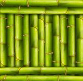 Bamboo frame background. Vibrant bamboo stalks in a framed position royalty free stock photography
