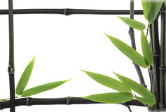 Bamboo frame with bamboo steams Royalty Free Stock Image