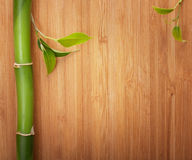 Bamboo frame made of stems Stock Image