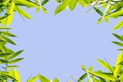 Bamboo frame Stock Image