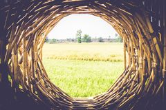Bamboo frames. Wood stick banners of round shapes. rustic bamboo sign picture frame green beautiful rice field spring summer stock photos