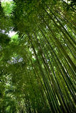 Bamboo in a French park Stock Photos