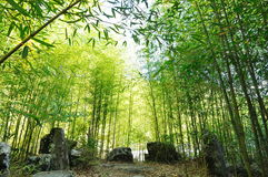 A bamboo frest Stock Photography