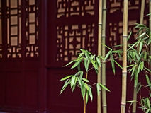 Bamboo in front of red wooden doors Royalty Free Stock Photo