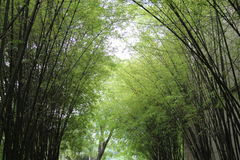 Bamboo garden Stock Photos