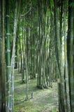 Bamboo Garden Royalty Free Stock Photo