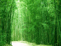 Bamboo garden Stock Photo