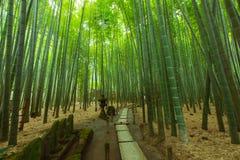 Free Bamboo Garden In Kamakura Japan Royalty Free Stock Image - 102385846