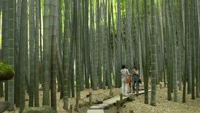 Bamboo Garden in Kamakura stock footage