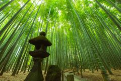Bamboo Garden in Kamakura Japan stock image