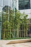 Bamboo garden in Shanghai, China. Bamboo garden near modern building in Shanghai, China royalty free stock photography