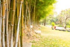 Bamboo garden Royalty Free Stock Photography
