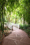 Bamboo garden with river and bridge Royalty Free Stock Photography