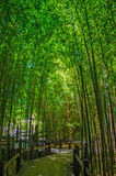 Bamboo Garden. Tall Lush Bamboo Gardens with a walkway located in Pasadena, California stock photo
