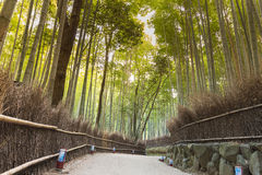Bamboo garden with walking way Arashiyama Royalty Free Stock Image