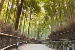 Bamboo garden with walking way Arashiyama. Kyoto Japan Royalty Free Stock Image