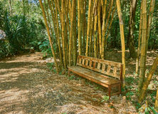 Bamboo garden and wooden bench Stock Images