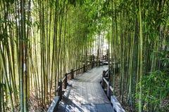 Bamboo Garden Royalty Free Stock Image