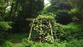 Bamboo gazebo. In botanical park Batumi bamboo gazebo stock video footage