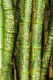 Bamboo Graffiti Stock Images