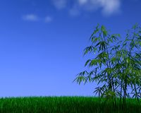 Bamboo&grass. 3d bamboo on grass Royalty Free Stock Photos