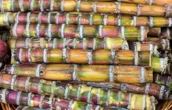 Bamboo grass type Chusquea culeou tall green shoots. Stock Image