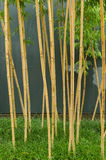 Bamboo and gray wall background Royalty Free Stock Images