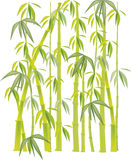 Bamboo green. Green bamboo shoots on white background Vector Illustration