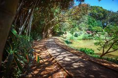 Bamboo alley, walk path and bench in Royal Botanic King Gardens. Peradeniya. Kandy. Sri Lanka. Royalty Free Stock Photo