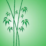 Bamboo on green Royalty Free Stock Image