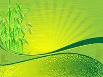 Bamboo green background. Bamboo in the background of the sky in the rays, which is quiet ripple of water. All in green and yellow colors Stock Photos