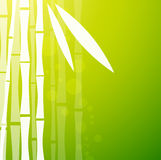 Bamboo Green Background Stock Photography