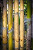 Bamboo green background. It look strong and beautyful stock photos