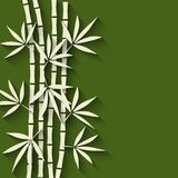 Bamboo green background Stock Image