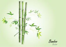 Bamboo,Green bamboo vector illustration on light green background Royalty Free Stock Photography