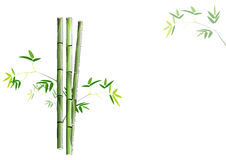 bamboo green bamboo on white background ,vector illustration Stock Photos