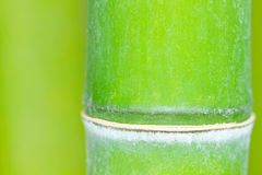 Bamboo green forest Royalty Free Stock Photos