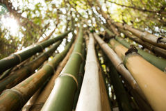 Bamboo green forest background Stock Photo